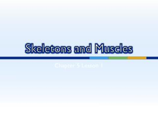 Skeletons and Muscles