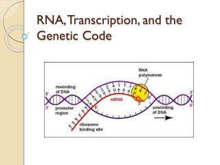 RNA, Transcription, and the Genetic Code