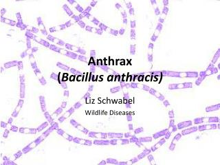 Anthrax ( Bacillus  anthracis )