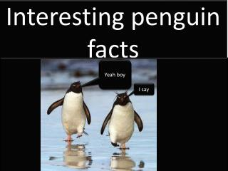 Interesting penguin facts
