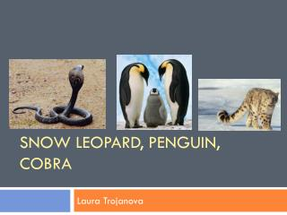 SNOW LEOPARD, PENGUIN, COBRA