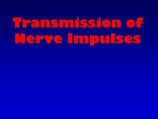 Transmission of Nerve Impulses