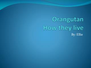 Orangutan How they live