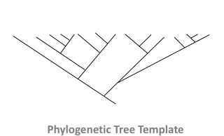 Phylogenetic Tree Template