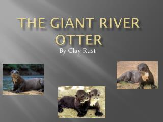 The Giant River Otter