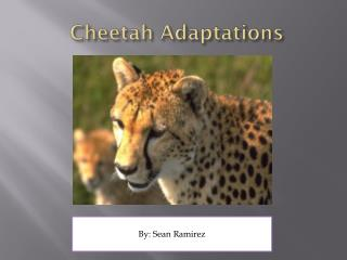Cheetah Adaptations