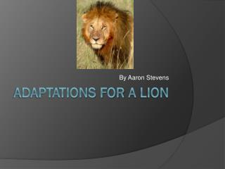 Adaptations For  A L ion