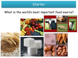 What is the world's most important food source?