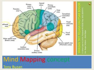 Mind Mapping concept Tony Buzan