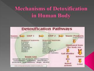 Mechanisms of  Detoxification in Human Body