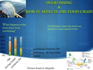 OVERFISHING & How it affects the food chain