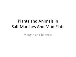 Plants and Animals in  Salt Marshes And Mud Flats