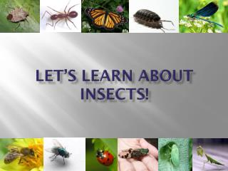 Let's Learn About Insects!