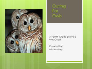 Outing For  Owls