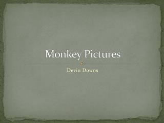 Monkey Pictures