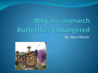Why are monarch Butterflies Endangered