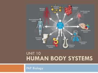 Unit 10 Human Body Systems