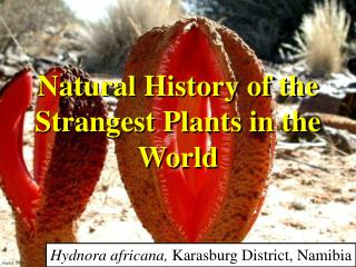 Natural History of the  Strangest Plants in the  World