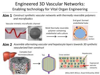 Engineered 3D Vascular Networks:  Enabling technology for Vital Organ Engineering