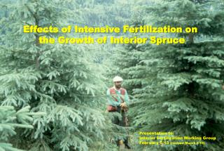 Effects of Intensive Fertilization on  the Growth of Interior Spruce