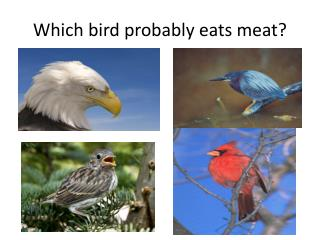 Which bird probably eats meat?