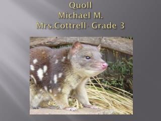 Quoll Michael  M. Mrs.Cottrell - Grade 3