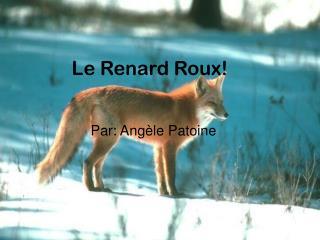 Le Renard Roux!