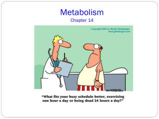 Metabolism Chapter 14