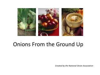 Onions From the Ground Up