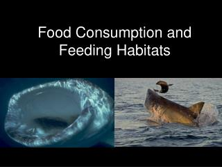 Food Consumption and Feeding Habitats