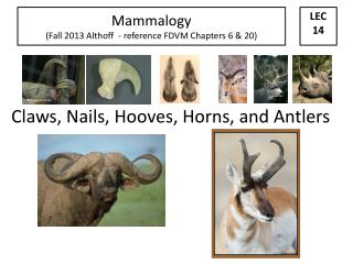 Claws, Nails, Hooves, Horns, and Antlers