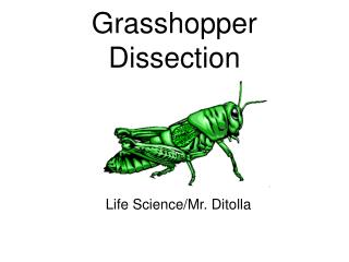 Grasshopper Dissection