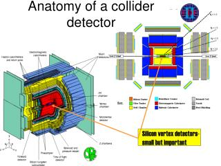 Anatomy of a collider detector