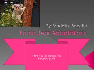 Koala Bear Adaptations