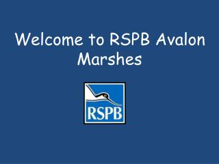 Welcome to RSPB Avalon Marshes
