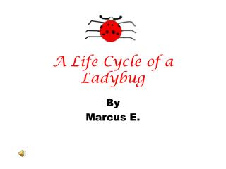 A Life Cycle of a Ladybug