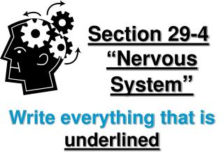 "Section 29-4 ""Nervous System """