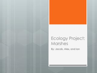 Ecology Project: Marshes