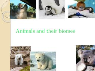 Animals and their biomes