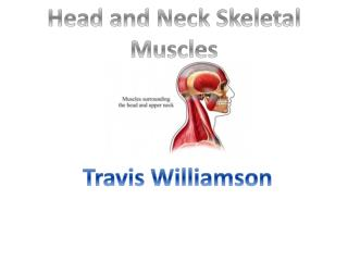 Head and Neck Skeletal Muscles