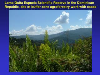 Loma Quita Espuela Scientific Reserve in the Dominican