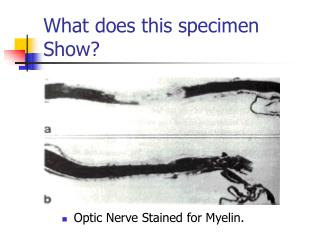What does this specimen Show?