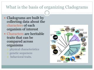 What is the basis of organizing  Cladograms