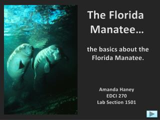 The Florida  Manatee…
