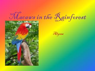 Macaws in the Rainforest