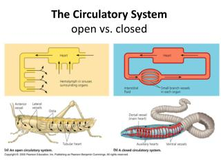 The Circulatory  System open vs. closed