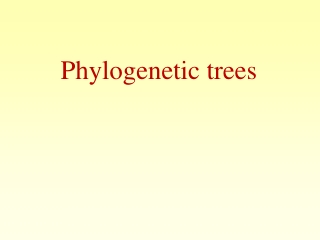 Inferring phylogenetic trees: Distance and maximum likelihood methods