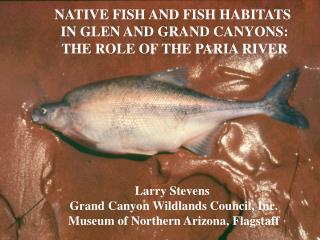NATIVE FISH AND FISH HABITATS  IN GLEN AND GRAND CANYONS: THE ROLE OF THE PARIA RIVER