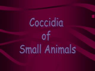 Coccidia  of  Small Animals