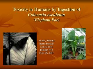 Toxicity in Humans by Ingestion of Colocasia esculenta (Elephant Ear)
